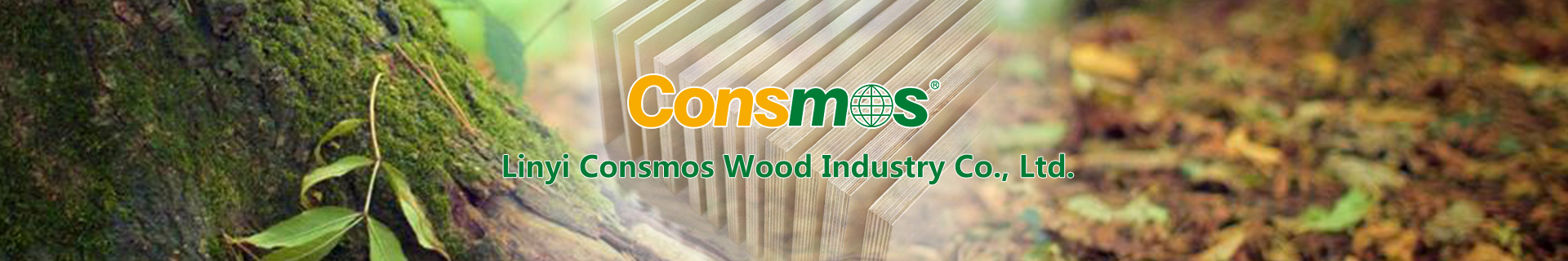 Consmos Professional In Supplying Wood Based Panel Products